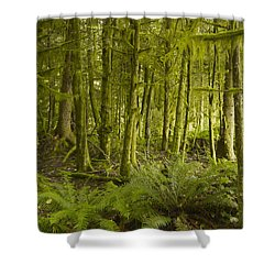 A Lush Forest Tofino British Columbia Shower Curtain by Ian Grant