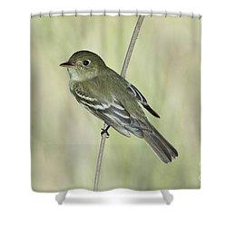 Acadian Flycatcher Shower Curtain by Anthony Mercieca