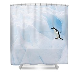 Adelie Penguin On Iceberg Shower Curtain by Suzi Eszterhas