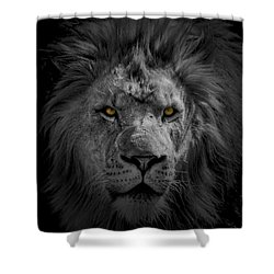 African Lion Shower Curtain by Peter Lakomy