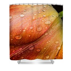 After The Rain Shower Curtain by Sara Frank