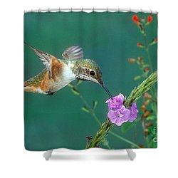 Allens Hummingbird Shower Curtain by Anthony Mercieca