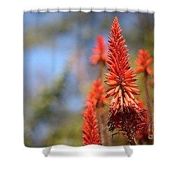 Aloe Succotrina  Shower Curtain