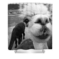 Alpaca Face Shower Curtain