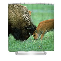 American Bison Cow And Calf Shower Curtain by Suzi Eszterhas