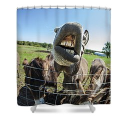 Animal Personalities Silly Talking Donkey With Whiskers Shower Curtain by Jani Bryson