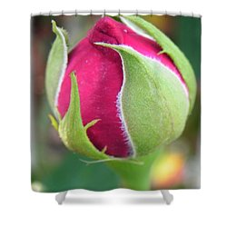 Shower Curtain featuring the photograph Anticipation by Deb Halloran