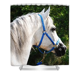 Arabian Shower Curtain