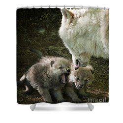 Arctic Wolf Pups Shower Curtain