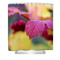 Arrowwood Leaf - Featured 3 Shower Curtain