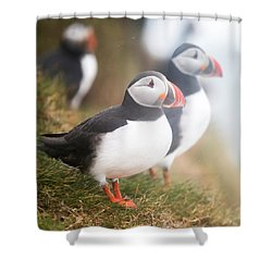 Atlantic Puffins Fratercula Arctica Shower Curtain by Panoramic Images
