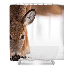 Attention Shower Curtain by Karol Livote