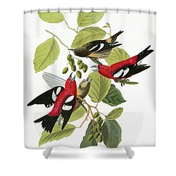 Audubon Crossbill Shower Curtain