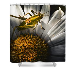 Australian Grasshopper On Flowers. Spring Concept Shower Curtain by Jorgo Photography - Wall Art Gallery