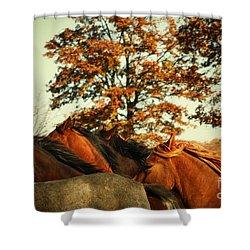 Autumn Wild Horses Shower Curtain