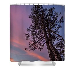 Shower Curtain featuring the photograph Awakening by Davorin Mance