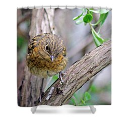 Baby Robin Shower Curtain