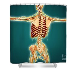 Back View Of Human Skeleton Shower Curtain by Stocktrek Images
