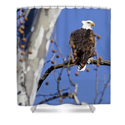 Bald Eagle 2 Shower Curtain by David Lester