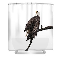 Bald Eagle 5 Shower Curtain by David Lester