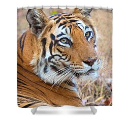 Bandhavgarh Tigeress Shower Curtain