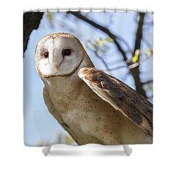 Barn Owl Shower Curtain