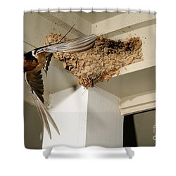 Barn Swallow Shower Curtain by Scott Linstead