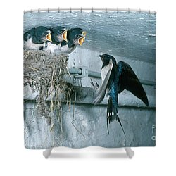 Barn Swallows Shower Curtain by Hans Reinhard