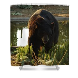 Bear 1 Shower Curtain