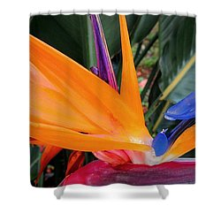 Shower Curtain featuring the photograph Bird Of Paradise by Kristine Merc