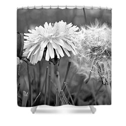 Birth Life Death Shower Curtain by Frozen in Time Fine Art Photography