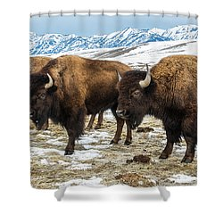Bison In The 24,700-acre National Elk Shower Curtain
