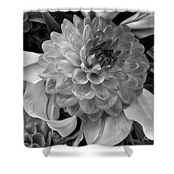 Shower Curtain featuring the photograph Black And White Dahlia by Arlene Carmel