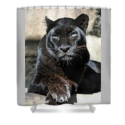 Black Leopard Shower Curtain by Savannah Gibbs