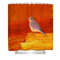 Blue Bird Shower Curtain by Jeff Swan