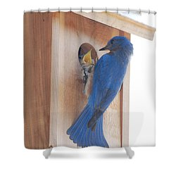 Bluebird Of Happiness Shower Curtain
