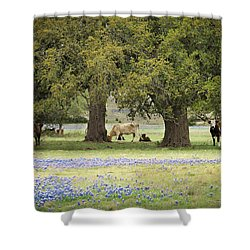 Bluebonnets And Bovines Shower Curtain