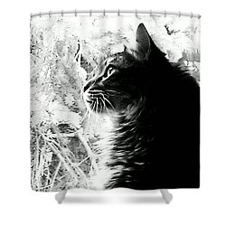 Shower Curtain featuring the photograph Bo by Jacqueline McReynolds
