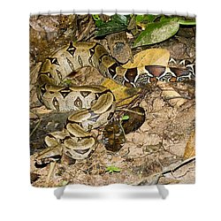 Boa Constrictor Shower Curtain by Gregory G. Dimijian, M.D.