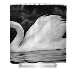 Boston Public Garden Swan Shower Curtain