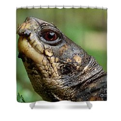 Box Turtle Shower Curtain by Jane Ford
