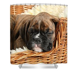 Boxer Puppy Shower Curtain by Mark Taylor
