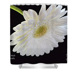Shower Curtain featuring the photograph Bright White Gerber Daisy # 2 by Jeannie Rhode