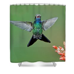 Broad-billed Hummingbird Shower Curtain by Anthony Mercieca