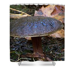 Shower Curtain featuring the photograph Brown Toadstool by Chalet Roome-Rigdon