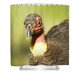 Brush Scrub Turkey Shower Curtain by Jorgo Photography - Wall Art Gallery