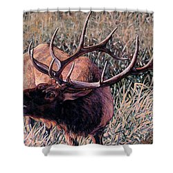 Bugle Boy Shower Curtain by Craig T Burgwardt