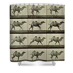 Camel Shower Curtain by Eadweard Muybridge