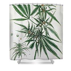 Cannabis  Shower Curtain by Elizabeth Blackwell
