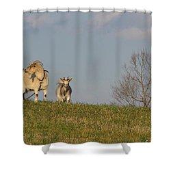 Caprine Hill Shower Curtain by Matt Taylor